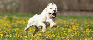 certificado medico perros castellon